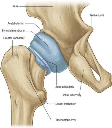 What Is A Hip Capsule Injury